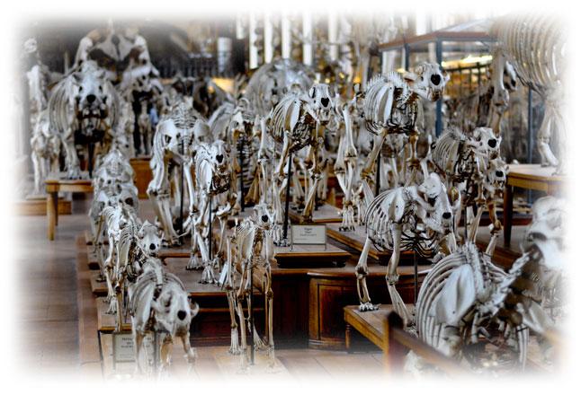 Galerie des Ossements du Musée National d'Histoire Naturelle
